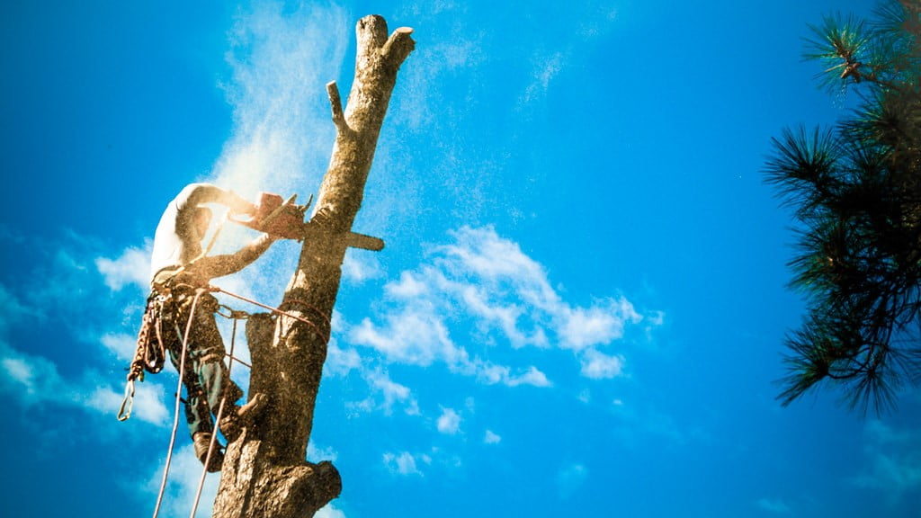 Tree Service Photography | Creative Commons Attribution Lice… | Flickr